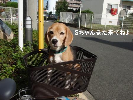 朝Run.jpg