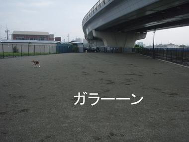 P7250039.JPG